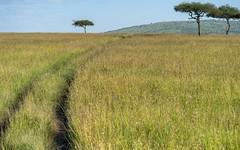 """the """"road"""" (charlesgyoung) Tags: africa tanzania nikon safari acacia d3 serengetinationalpark charlesyoung nikonfx nomadtanzania karineaignerphotographyexpedition"""