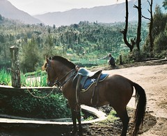 """Quit horsing around"" (ffrhna) Tags: travel film 35mm indonesia kodakgold mountbromo minoltaxg1"