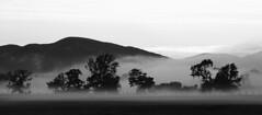 Evening mist of the A811 (Ray Crabb) Tags: trees mist tree fence mono evening 2014 drymen scotchmist a811