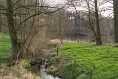 Spring started - HFF (puste66blume) Tags: wiese bach grn zaun bume alpha58 inesbilder puste66blume