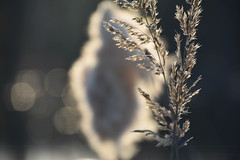 Back to my roots (aniawagner) Tags: light plants plant nature spring bokeh happiness