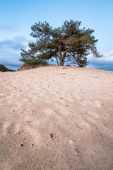 Tree Portrait (loddeur) Tags: portrait tree face pine sand perspective wideangle boom depth veluwe lonetree zand zandverstuiving kootwijkerzand groothoek 1018stm