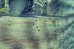 Green tennis balls at Pandora Park, Vancouver (annapolis_rose) Tags: vancouver tenniscourt tennisballs gardendrive pandorapark