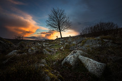 The Tree (Arvid Bjrkqvist) Tags: blue sunset sky orange tree green nature colors grass clouds dark landscape moss spring rocks mood alone sweden stones lone lonely kungsbacka sandsjbacka