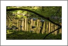 Morgen an der Erlau (Morning at river Erlau) (alfred.hausberger) Tags: spiegelung erlau morgenwanderung erlautal
