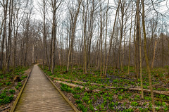 Waterloo trails (eppelsauce3966) Tags: trees nature nikon michigan tokina trail waterloo bog 1116mm d7000