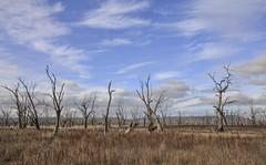 Winton Wetlands [Explored] (phunnyfotos) Tags: landscape nikon australia victoria vic wetland winton glenrowan deadtrees benalla sigma1020mm warbyranges northeastvictoria taminick lakemokoan d5100 wintonwetlands nikond5100 phunnyfotos