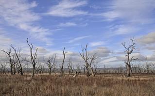 Winton Wetlands [Explored]