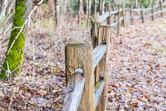 Winter Scene. (Omygodtom) Tags: winter texture fence season outdoors nikon scene ceder oaksbottom d7100 nikon70300mmvrlens