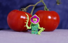 The great German philosopher Friedrich Nietzsche, when speaking metaphorically of Human Nature, said that a Tomato plant will only give you Tomatoes. No amount of arguing or cajoling will force it to give you anything else. (Busted.Knuckles) Tags: home fun lego minifigures plantmonster pentaxks2 camerautility5