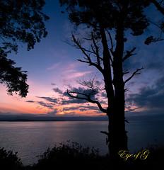 Sunset on the Straits of Jaun De Fuca.jpg (Eye of G Photography) Tags: sunset plants usa tree silhouette places whidbeyisland northamerica pugetsound washingtonstate sunsetsunrise skyclouds hillroad ebeylanding