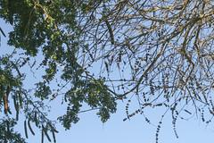 Hanging From Trees (cobalt123) Tags: arizona canon tucson firstphotos age11 2016 anavey tucsonrockandgemshow xti canonrebelxti anaveybolender