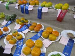 starr-091003-7540-Diospyros_kaki-Fuyu_fruit-Maui_County_Fair_Kahului-Maui (Starr Environmental) Tags: diospyroskaki