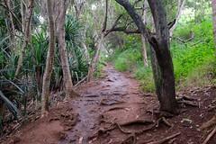 Trail to Secret Beach (pburka) Tags: hawaii path secretbeach jungle kauai