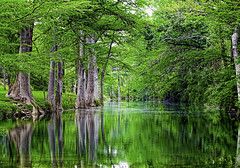 Central Texas Wonderland (brucecarlson66) Tags: flat creek cyprus tree canopy austin texas water green brown reflection driftwood overhang over hang peaceful serene bark rough flow downstream stream central country countryside spring fed winery peace tranquil tranquility wonder land wonderland