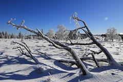 Fallen Tree (winkler.roger) Tags: winter snow nature germany landscape blackforest fallentree freudenstadt schwarzwaldhochstrasse kniebis