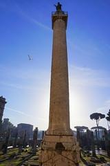 Column at the Trajan Forum at dawn, Rome (mattk1979) Tags: italy rome roma building history statue sunrise dawn ruins italia roman outdoor forum column trajan
