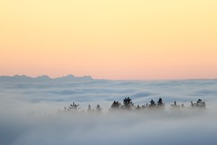 sky high (dieter_turk) Tags: travel sunset sky panorama cloud tree beautiful austria woods earth upper national obersterreich geographic vastness mhlviertel