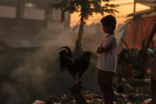 Boy & Cock, Cebu City Philippines