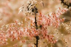 Infinito (Momoztla) Tags: mexico rojo flor rama estado espiga espina ixtapaluca momoztla