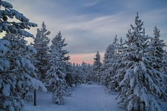 Amazing view Lapland Rovaniemi (olafgroeneweg) Tags: trees winter sunset sky white snow cold colors beautiful beauty forest finland landscape evening frozen amazing colorful view cloudy wildlife lapland scandinavia artic scandinavian winterlandscape