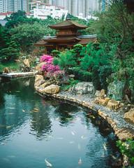Nan Lian Koi Pond (Taomeister) Tags: hongkong koipond velvia50 diamondhill fujifilmgf670 gf670 nanliangardenpark