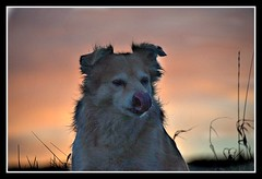 Lick ones lips (patrick.verstappen) Tags: winter portrait dog pet animal evening photo yahoo google flickr december belgium image sweet pat rusty sigma facebook picassa gingelom ipernity d7100 pinterest ipiccy