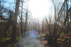 (nic lawrance) Tags: trees light sun nature woodland shine bright cotswolds gloucestershire corona