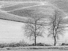 Toscana em Preto e Branco (Luis Fernando Barp) Tags: italy europa europe italia cretesenese