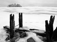 BW - Joensuu (Sami Niemeläinen (instagram: santtujns)) Tags: city winter blackandwhite bw lake monochrome suomi finland frozen north fujifilm talvi mustavalko x20 joensuu järvi karjala kaupunki pyhäselkä kuhasalo carelia jäinen pohjois mustavalkea kalmonniemi