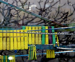 'Please hold' (Snorkle-suz) Tags: pegs clothesline yellow tree winter outside cold dof oxidized metal line bokeh rusty rust canonpowershotsx700hs stilllife ordinaryart shallowdepthoffield