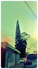 Guatemala City (xiroro) Tags: street calle guatemala cedar guatemalacity cedro