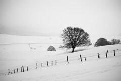 Sur les hauteurs du lac Chauvet (steph20_2) Tags: bw white mountain black monochrome montagne countryside noir noiretblanc ngc central panasonic neige 20mm monochrom campagne blanc moutain sancy massif clôture m43 gh3 skanchelli