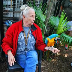 Key West (Florida) Trip 2015 0278Ri sq (edgarandron - Busy!) Tags: rescue bird birds keys florida parrot keywest cockatoo macaw floridakeys nancyforrester