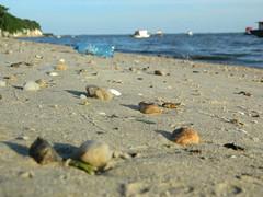 Reciclo da natureza (Agência 21 Digital) Tags: praia beach sand areia recycle reciclagem