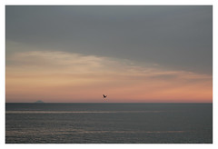 Stromboli (ChiaraChiò) Tags: sunset sea sun tramonto mare swallow calabria stromboli rondine