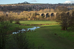 Walking The Dogs, New Mills, Derbyshire... (Geraldine Curtis) Tags: light dogs river derbyshire viaduct dogwalker newmills