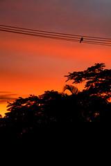 birdrise (marennl) Tags: summer sun nature birds sunrise canon bay coast rainforest wildlife sigma parrot australia east jungle nsw byron tamron canoneos400d