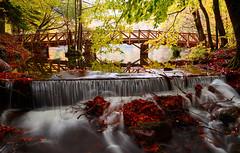 The bridge on Big Lake (RKAMARI) Tags: wood longexposure bridge autumn trees light lake colour water forest waterfall saturated cities bolu yedigller otdoor