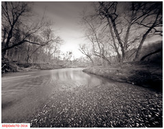Glendon Forest (DelioTO) Tags: ontario canada rain rural landscape march blackwhite woods trails pinhole beaches historical 4x5 toned natparks autaut f175 aph09 panx50