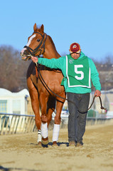 2016-01-03 (89) r9 #5 Tough Weather (JLeeFleenor) Tags: photos photography md marylandracing marylandhorseracing laurelpark horses thoroughbreds equine equestrian cheval cavalo cavallo cavall caballo pferd paard perd hevonen hest hestur cal kon konj beygir capall ceffyl cuddy yarraman faras alogo soos kuda uma pfeerd koin    hst     ko  chestnut maryland