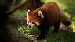 A Wild animals but cute (PhotographyPLUS) Tags: pictures graphics photos illustrations images stockphotos articles footage stockimage freephoto stockphotograph