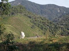 Cavalo (Felippe Frigo) Tags: brazil horse brasil da cavalo capara patrimonio penha