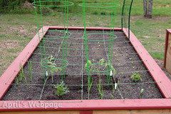 Left Garden Bed (aprilswebpage) Tags: flowers herbs tomatoes onions lettuce borage marigolds vegetablegarden squarefootgarden squarefootgardening growyourownfood vegetableplants raisedgardenbed