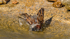Wash Cycle (Robert Streithorst) Tags: robert zoo cincinnati simplysuperb zoosofnorthamerica streithorst