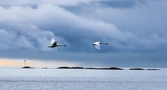 IMGP3800 copy (Tapio Kekkonen) Tags: summer moon beach sunrise sailing hanko subset bech finlad