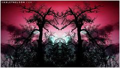 Regions Of The Mind (kaleynelson) Tags: trees abstract tree nature landscape meditate symmetry mirrored symmetric symmetrical meditation psychedelic spiritual chakra chakras alexgrey sacredgeometry kaleynelson