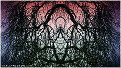 kaleynelsonsym17_1 (kaleynelson) Tags: trees abstract tree nature landscape meditate symmetry mirrored symmetric symmetrical meditation psychedelic spiritual chakra chakras alexgrey sacredgeometry kaleynelson