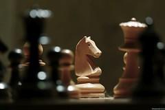 The Knight Control (Nemodus photos) Tags: chess knight cavalier echecs fz1000