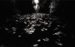 mirage VI (TommyOshima) Tags: blackandwhite monochrome blackwhite infrared mirage gr1s ricoh efke infraredfilm ir820